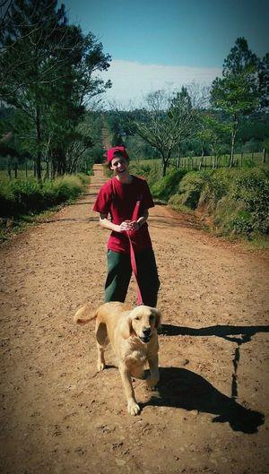 Golden Retriever Tarde  Caminata Misiones, Argentina