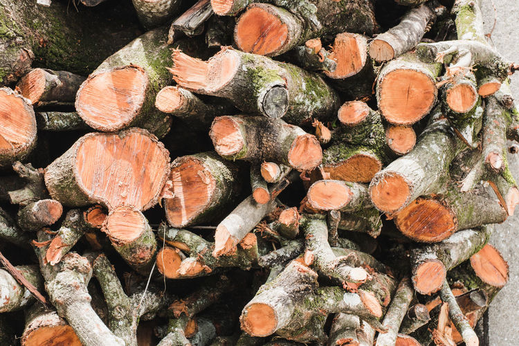 Abundance Backgrounds Close-up Day Deforestation Firewood Forest Fuel And Power Generation Full Frame Large Group Of Objects Log Lumber Industry Nature No People Outdoors Stack Textured  Timber Tree Wood Wood - Material Woodpile