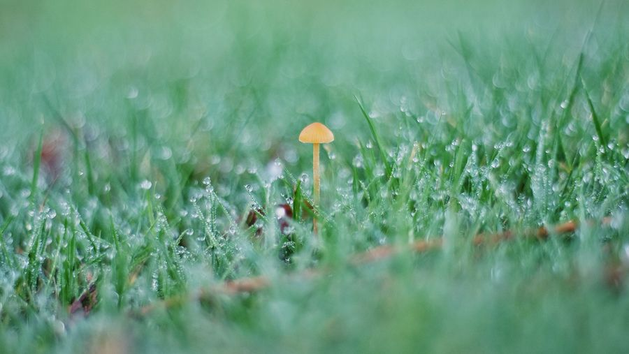 Close-up of dew on grassy field