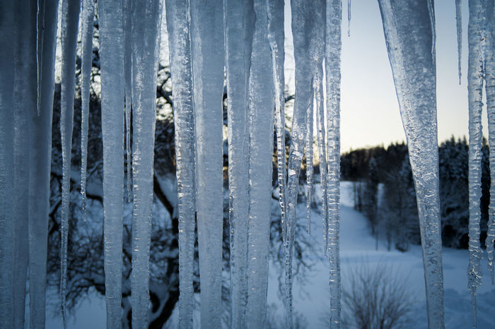 Hanging Icicles Beauty In Nature Close-up Cold Temperature Day Iceicles Nature No People Outdoors Sky Snow Tree Winter