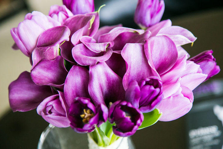 High angle view of purple tulips and cala lilies in vase