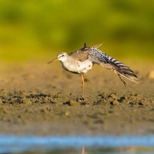 梳妆 Bird Flying