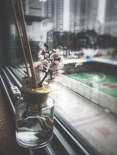 Basketball Court Bottle Diffuser Blue Spring Flowers Springtime Cherry Blossoms Plant Window Glass - Material Transparent Vase Flowering Plant Nature Flower Indoors  No People Architecture Glass Table Close-up City Flower Head