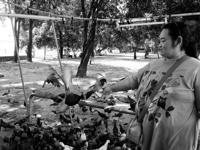 Mature woman feeding birds in park
