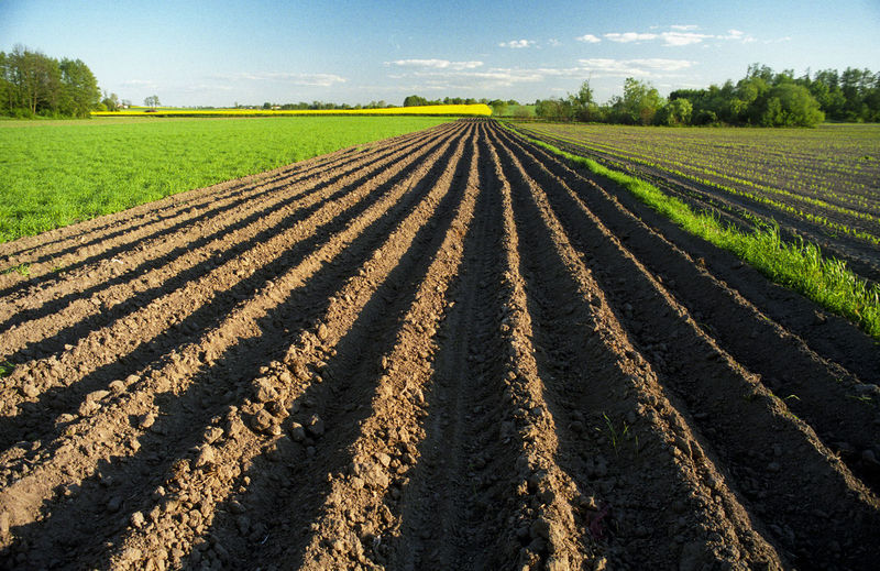 Agriculture Crop  Day Field Growth Landscape Nature No People Plowed Field Rural Scene Tranquility