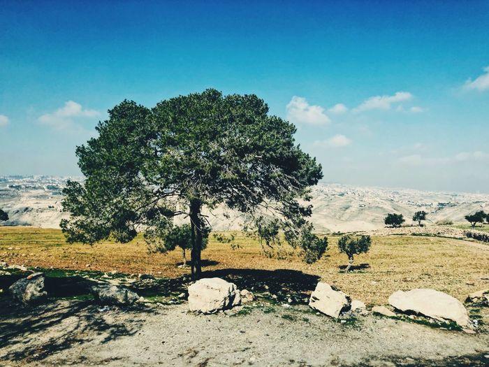 Rocks And Trees Panorama EyeEmBestPics EyeEm Best Shots Jerusalem Israel Desert Landscape Tree Tree Of Life Faith Sky Plant Tree Nature Cloud - Sky Tranquility Beauty In Nature No People Land Landscape Sunlight Day Blue Environment Non-urban Scene