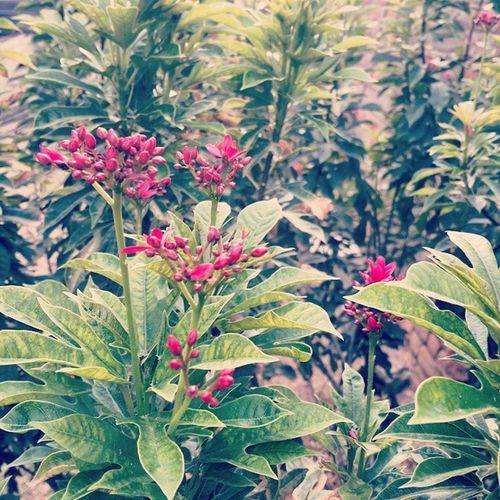 GardenInGodown Greenery Gogreen