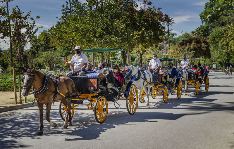 People riding horse cart on street