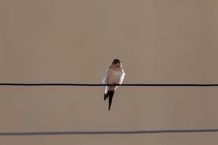Bird on wire