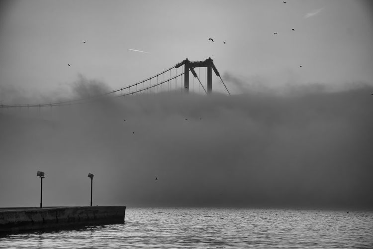 View of birds flying over sea and fog
