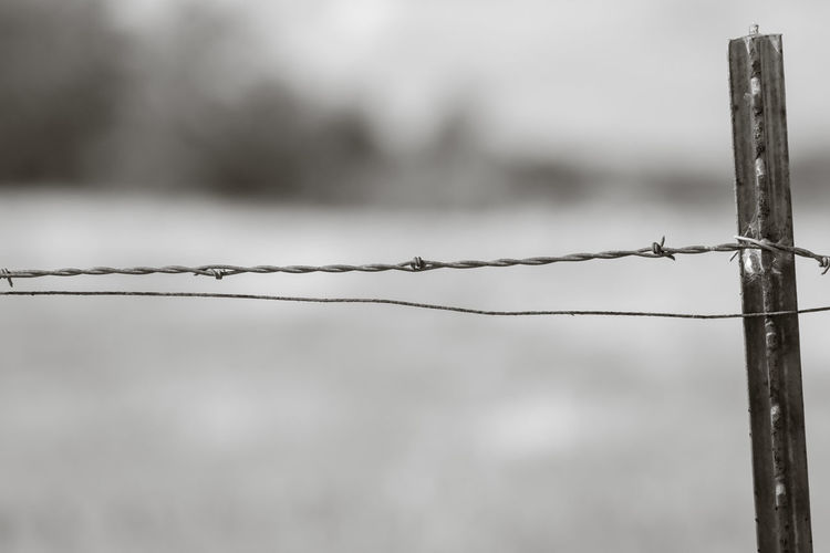 Close-up of barbed wire fence against blurred background