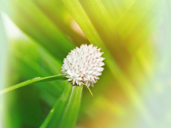 Textures Plant