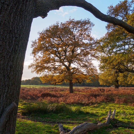 Autumn colours in Richmond Park near Robin Hood Gate, London (SW15) Autumn Autumn Colors Postcode Postcards Richmond Park, London Robin Hood Gate SW15 Autumn Colours Contrast Day Light And Shadow Nature No People Outdoors Tree