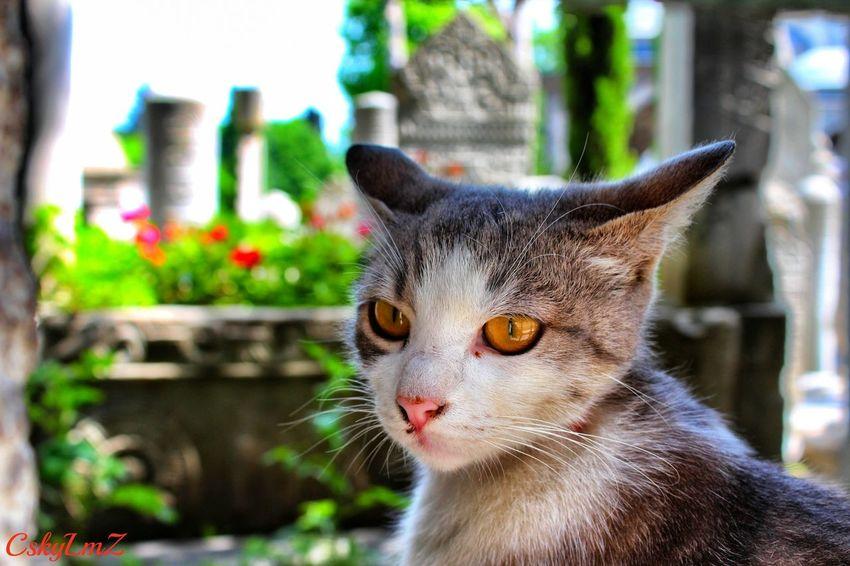 Cat Kedi Animals Anıyakala
