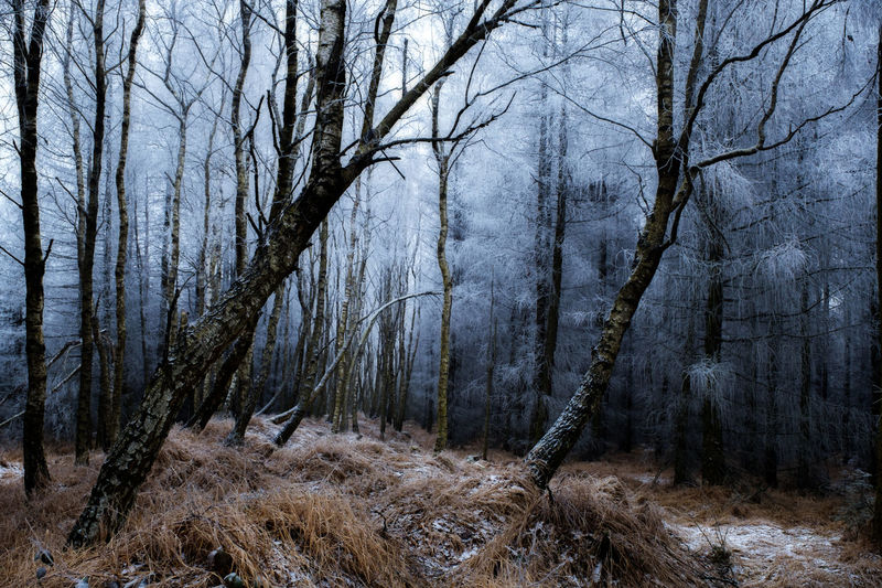 EyeEmNewHere Bare Tree Beauty In Nature Close-up Cold Temperature Day Forest Growth Landscape Nature No People Outdoors Pine Tree Snow Tree Tree Trunk Winter