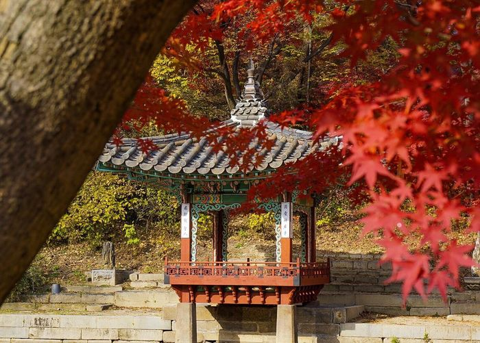 Autumn Tree Red Change Architecture Built Structure Day Outdoors Maple Tree No People Roof Building Exterior Leaf Travel Destinations Nature Beauty In Nature