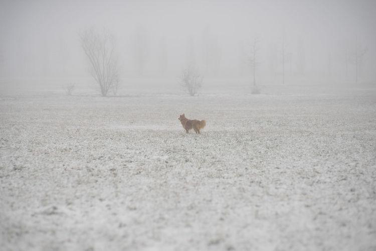 Animal Themes Brown Cold Temperature Day Dog Fog Half Breed Half Caste Mammal Nature One Animal Snow Tree Winter Pet Portraits