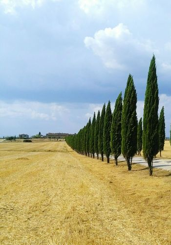 Tuscany Countryside Landscape
