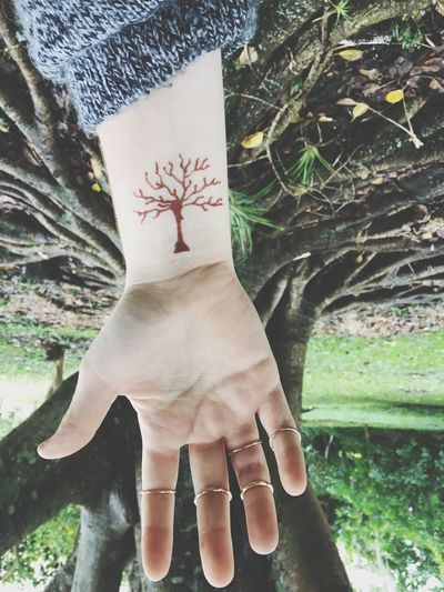 Back to EyeEm Upside Down Trees 🌳🍂
