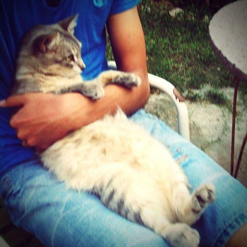 Con la gata más sensual :3 Mosha Kitty Gatita  Cute Sensualidad