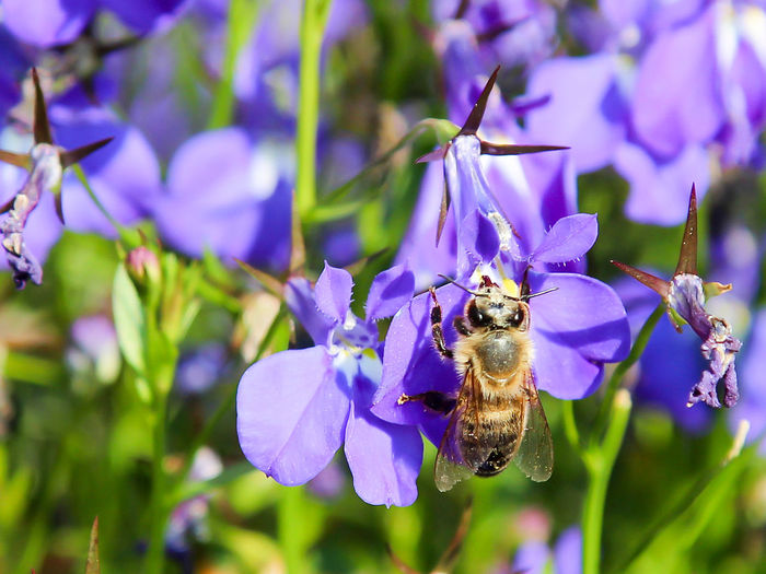 Flower Flower Head Focus On Foreground Insect Pollen Springtime
