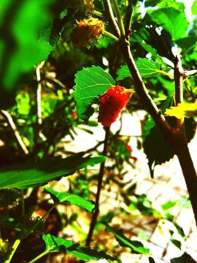 fruit hot