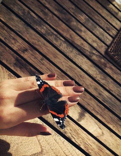 High angle view of butterfly on hand