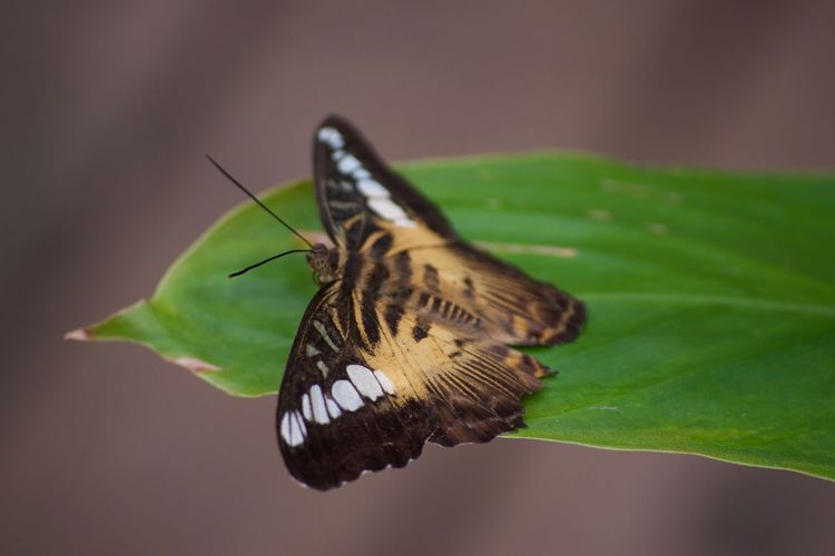 Animal Themes Animal Wildlife Animals In The Wild Beauty In Nature Close-up Day Freshness Insect Leaf Nature No People One Animal Outdoors Plant Pollination Spread Wings