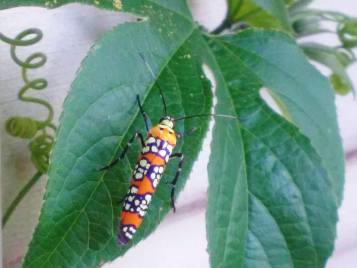 Ailanthus Webworm Moth Taking Photos Check This Out Relaxing