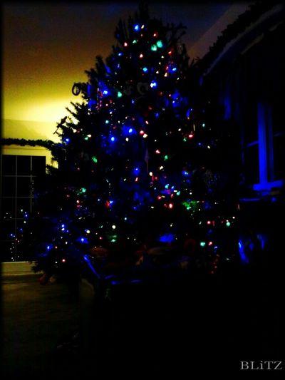Winter Holidays Christmas Christmas Tree Christmas Decorations