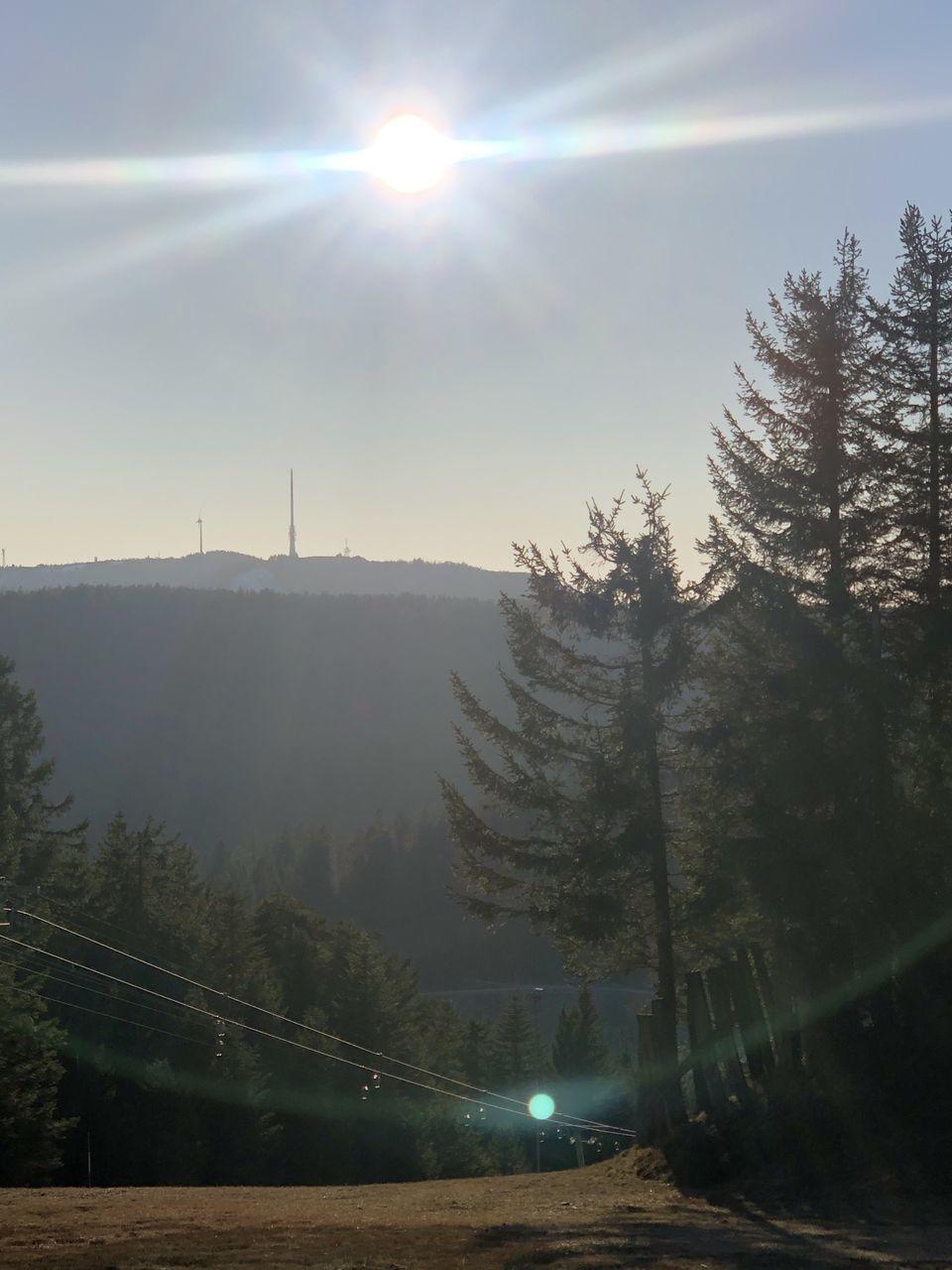SCENIC VIEW OF SUN SHINING THROUGH TREES
