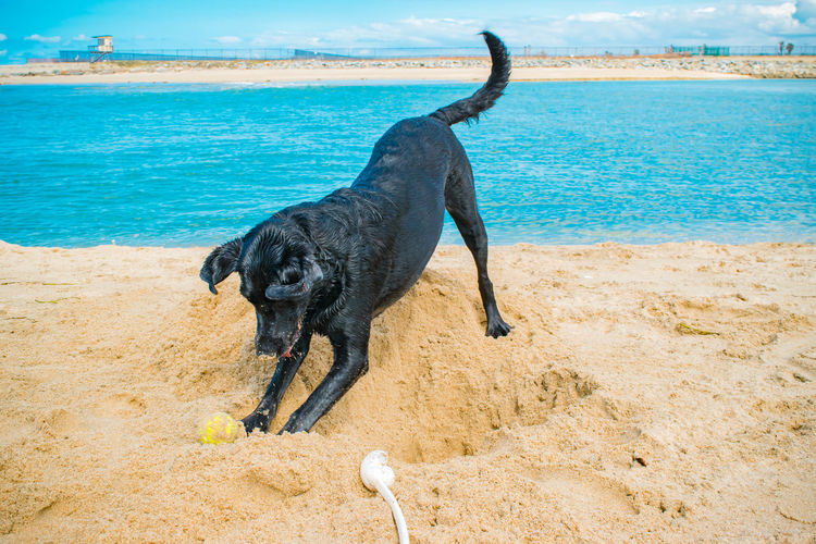 View Of Dog Playing On Beach