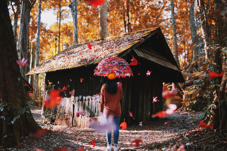 Autumn paints in colors that summer has never seen. 🍁🍁🍁 Young women holding maple leaf umbrellas standing under the autumn . Umbrellas Umbrella Women Leisure Activity Adult Plant Built Structure Leaves Full Length Day Walking Nature Lifestyles Colorful Colors Vintage Celebration Tree Architecture Autumn🍁🍁🍁 Autumn Leaves Autumn