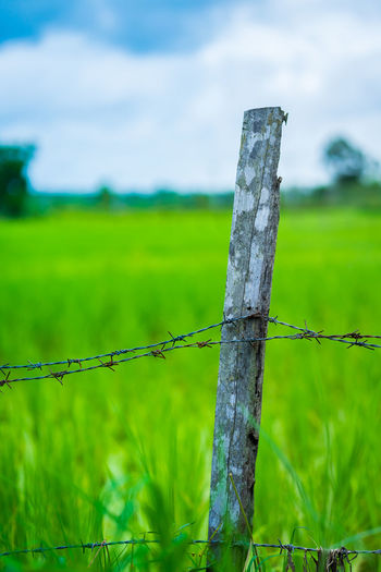 Comfortable Field Ground Barbed Wire Courtyards Focus On Foreground Green Color Nature Outdoors Safety Security Wood - Material Wooden Pole