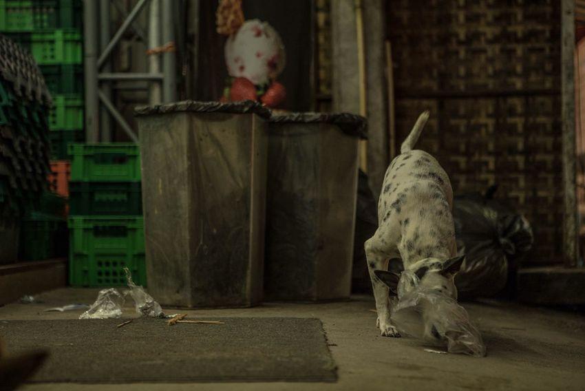 Dog Day One Animal Eating Dog Life Dog