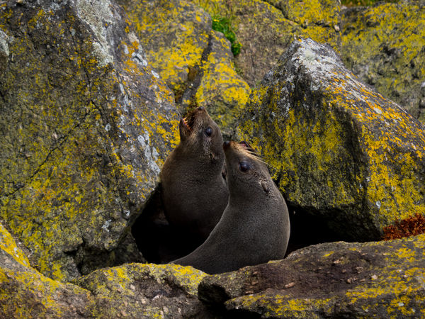 Seals On Rocks Animal Themes Animal Wildlife Animals In The Wild Autumn Beauty In Nature Close-up Day Forest Mammal Nature No People One Animal Outdoors Rock - Object Seals The Natural World Tree Yellow