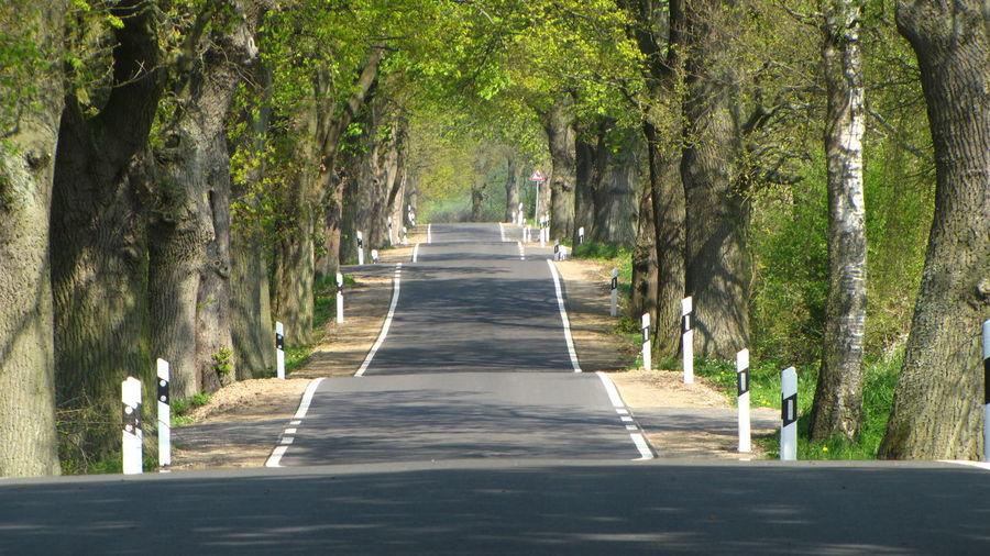 Empty narrow road along trees