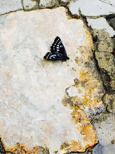 Like this butterfly, you have yo Fly Away