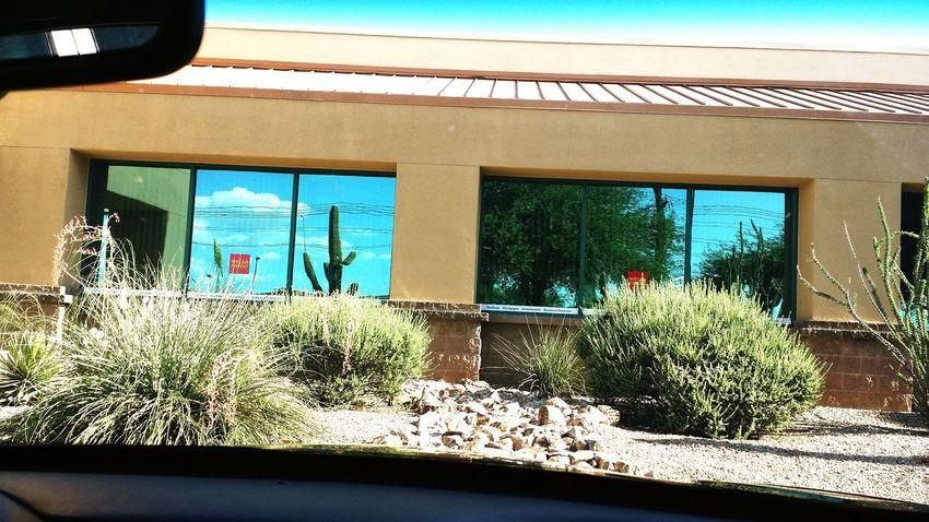 Life In A Window Arizona Cactus Creative Light And Shadow Tucson Arizona