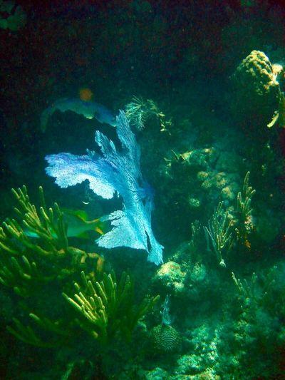 Honduras diving trip Honduras Diving Utila Sea Life Marine Life Underwater Under The Sea Under The Ocean Reefs Light Shines Through Scubalife Scuba Diving Blue
