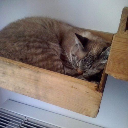Bell'addormentato nel cassetto.