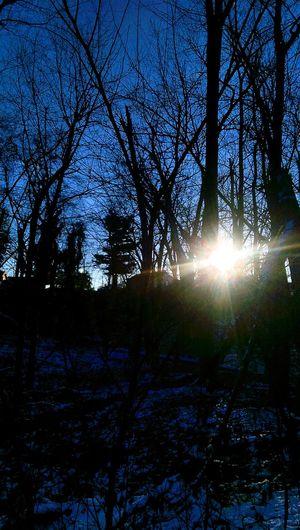 Sunrise Sun And Trees Snow ❄ Showcase: January
