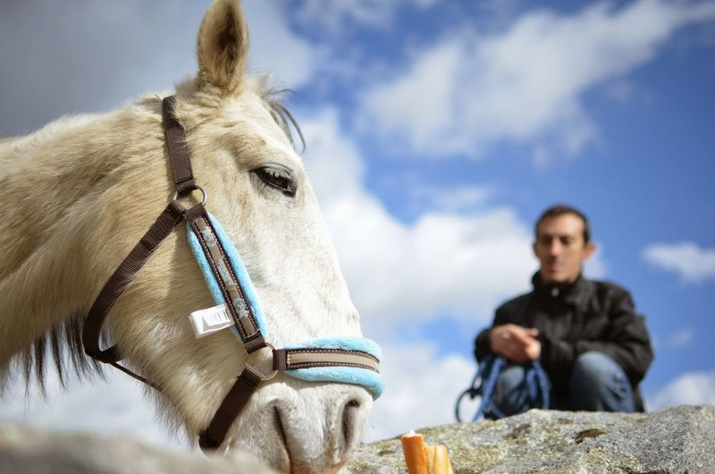 Donkey with owner outdoors