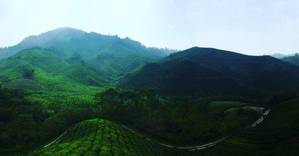 Malaysia Cameronhighlands hills Mountain