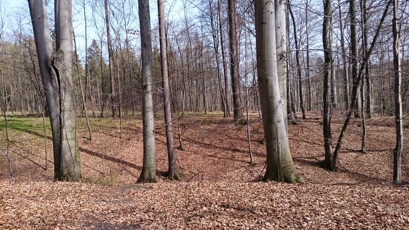 Showcase April Cieszyn Forest