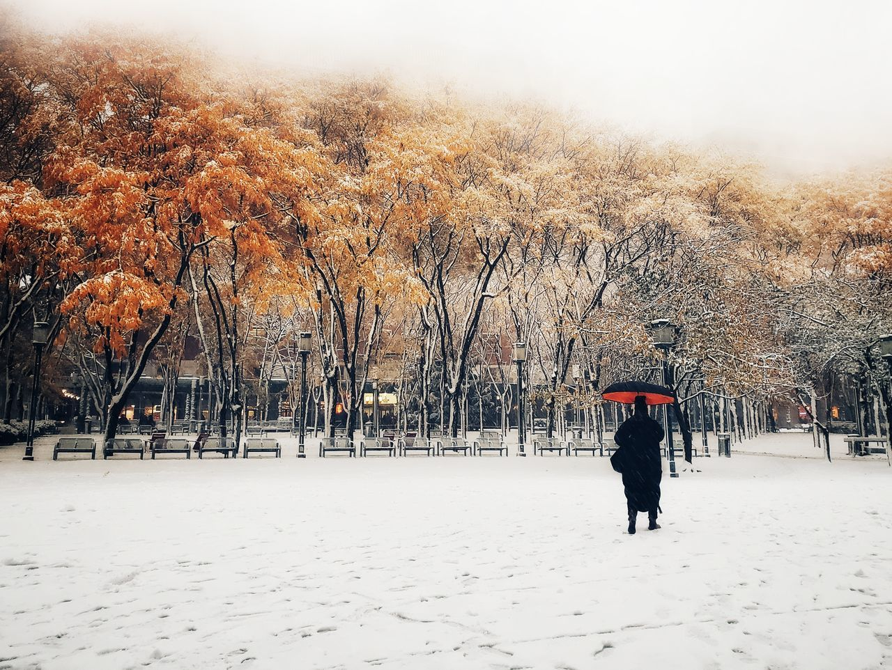 cold temperature, snow, winter, tree, plant, nature, warm clothing, covering, beauty in nature, day, clothing, real people, one person, lifestyles, change, rear view, land, field, white color, outdoors, extreme weather