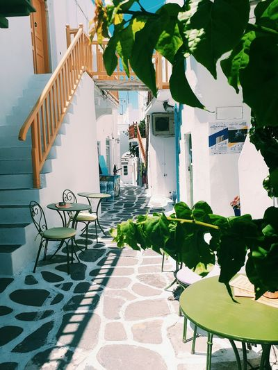 Mykonos Beauty Greek Islands Summer Travel Photography Travel Greece Greek Summer Mykonos,Greece Mykonos Mykonos Streets Leaves White White Building Mykonos Island Green And White Greece Staircase Shadow Table And Chair Street Cafe Coffee Spot Painted Floor Tree Sunlight Potted Plant Shadow Chair Architecture Plant Built Structure Building Exterior