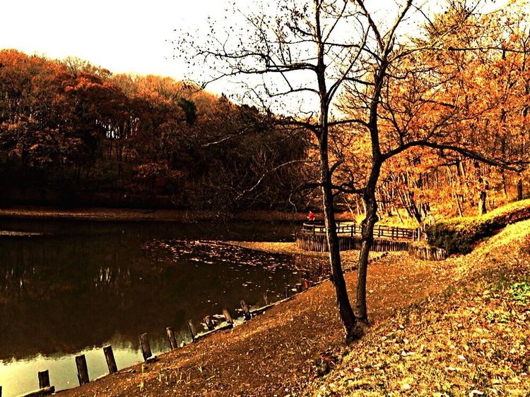 Taking Photos Iphonephotography Enjoying Life Pond Gold Yellow Hugging A Tree Autumnbeauty Autumn Beautiful Nature Evening