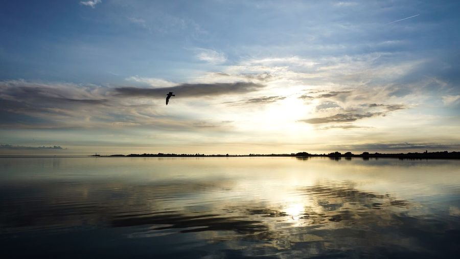 Water Sky Cloud - Sky Beauty In Nature Sea Scenics - Nature Reflection Animal Themes Animal Tranquility Bird Tranquil Scene Sunset Nature Silhouette Waterfront Beach Land Horizon Over Water