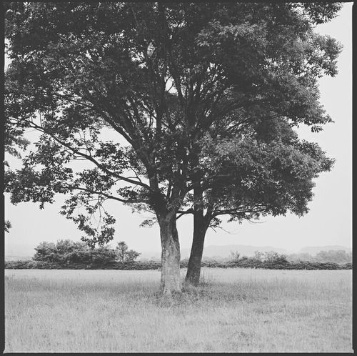 Tree Filmcamera Film Photography Film モノクロ 135film Photography Vscocam Shadow Fm2
